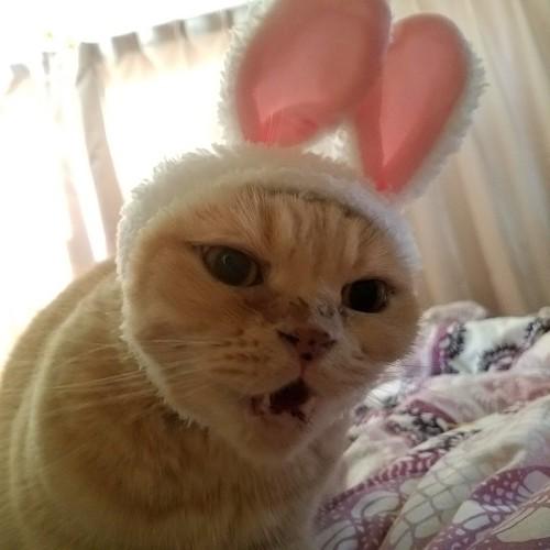 #うちの猫も顔大き目#