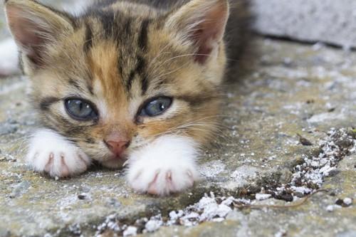横目で見る子猫
