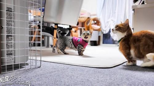 鳴いている服を来た猫