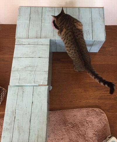 上から入ろうとしている