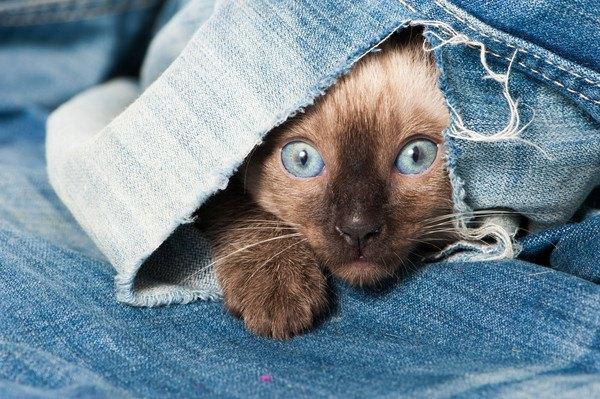 服の中から猫の顔