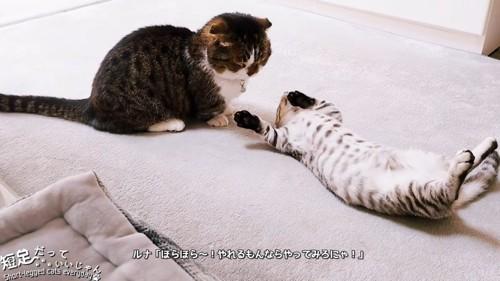 仰向けの子猫と座る成猫