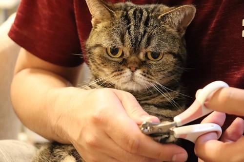 飼い主に爪切りをされて嫌そうな猫