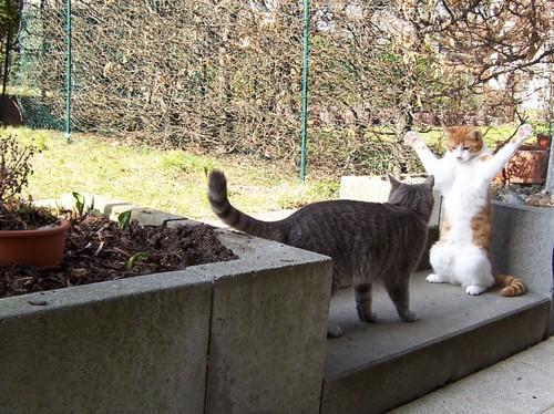 庭で向きあう二匹の猫
