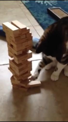 器用にとる猫