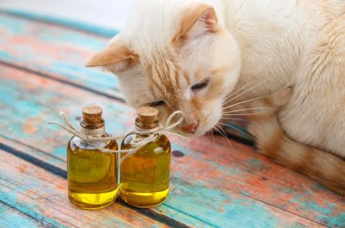 香水瓶と猫