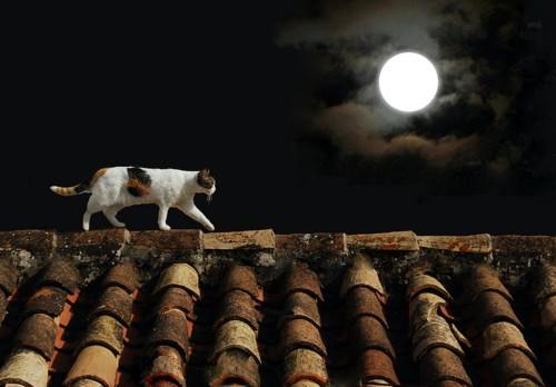 月明かりの下で屋根の上を歩く猫