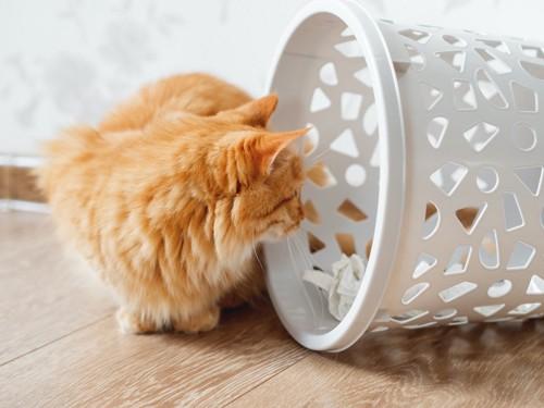 倒れたゴミ箱の中を見る猫