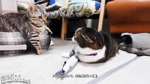 縞模様の猫と黒系の猫