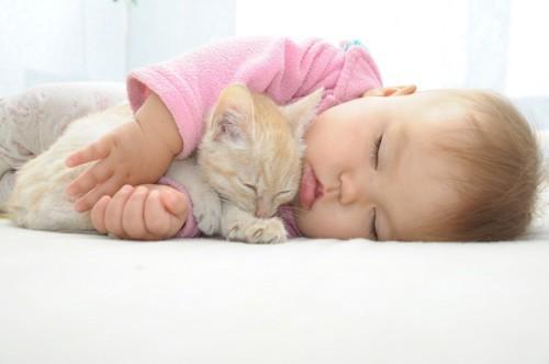 一緒に眠っている赤ちゃんと猫