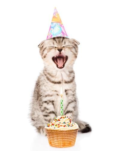 誕生日ハットをかぶる猫
