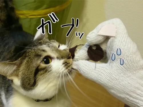 ガブッとする猫
