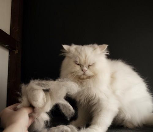 目を閉じた長毛猫と抜け毛を持つ人の手