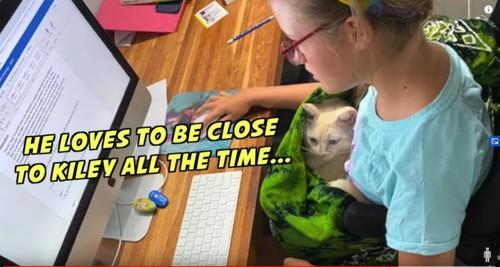 コンピュータに向かう少女と膝の上の猫