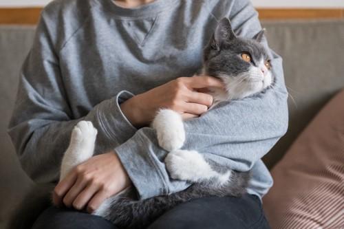 撫でられてそっぽを向く猫