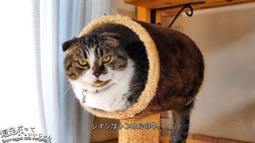 トンネルの中にいる猫
