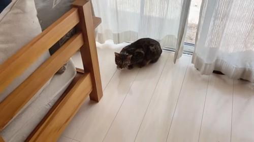 うずくまる猫