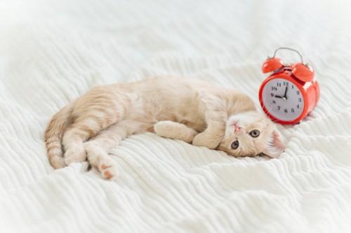 時計の前で眠る猫