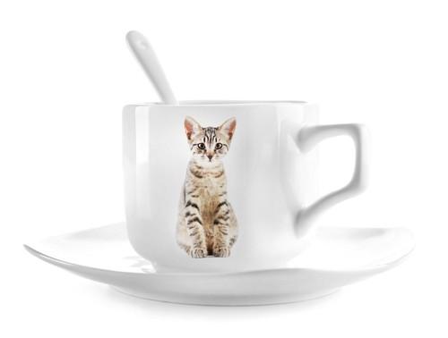 マグカップに印刷された猫の写真