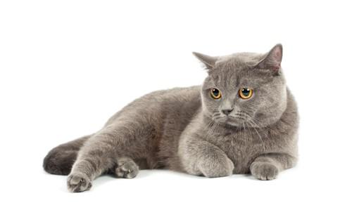 横座りをしてくつろいでいる猫
