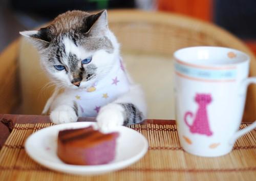 お菓子を猫ばばする猫
