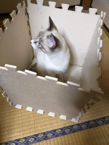 愛猫と猫ハウス