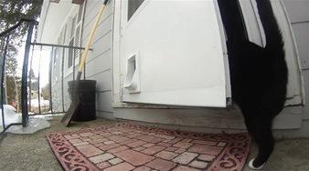 中に入る猫