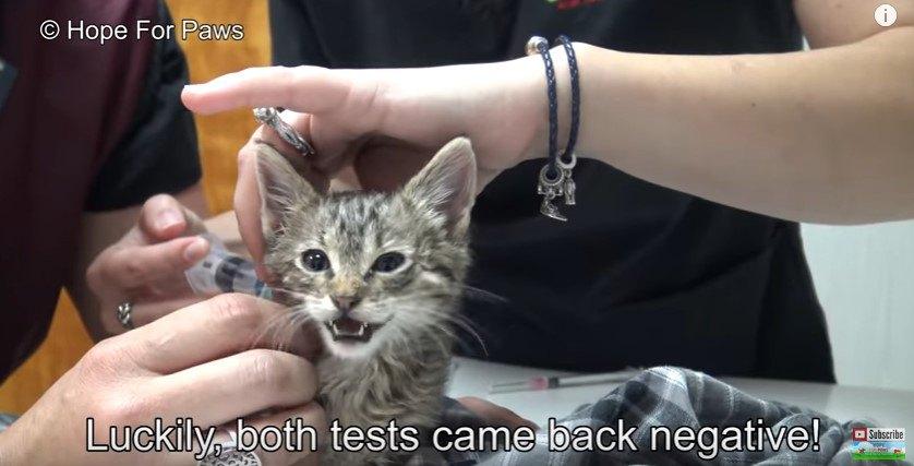 病院で検査を受ける子猫