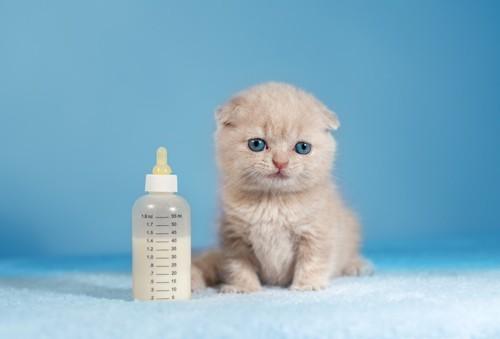 子猫とミルクの哺乳瓶