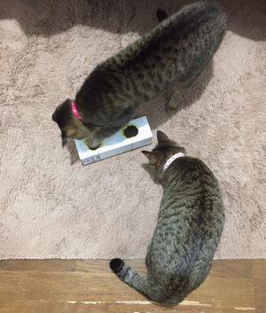 遊ぶ2匹の猫