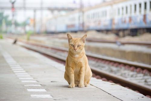 駅のホームにいる猫