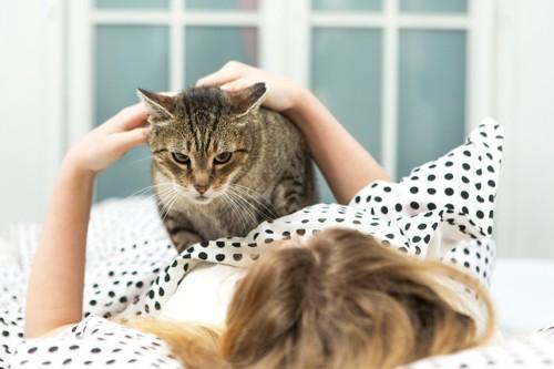 飼い主の布団の上に乗る猫