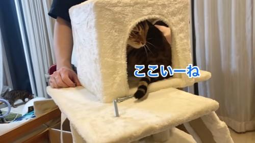 キャットタワーのハウスに入る猫
