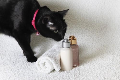 タオルとシャンプーを見る猫