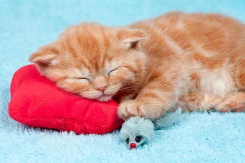 クッションを枕にする猫