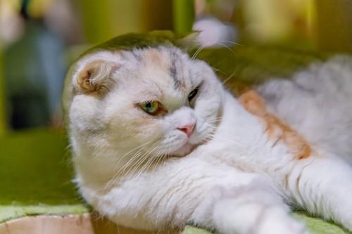 痛みをこらえるような顔の猫