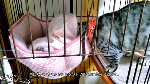ハンモックに頭を突っ込む猫