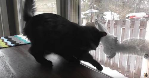 黒猫と屋外のリス