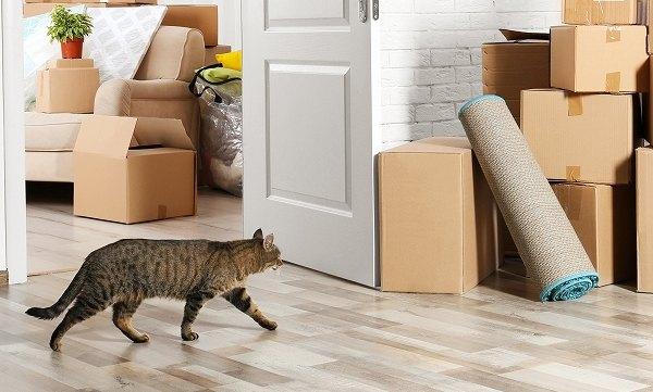 引っ越しで落ち着かない猫