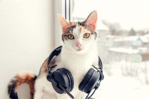 ヘッドホンをする猫