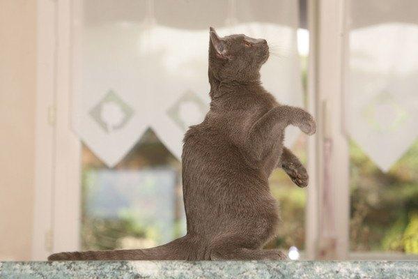 仕切りのないキッチンに座る猫