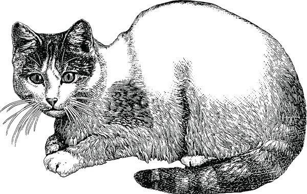 座っている猫のデッサン画