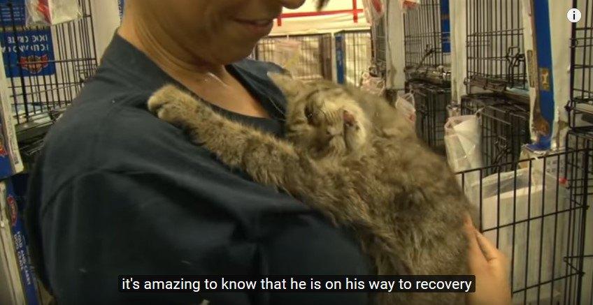 抱かれて甘える猫
