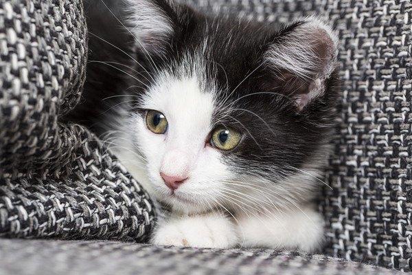 心配そうに見る黒白猫