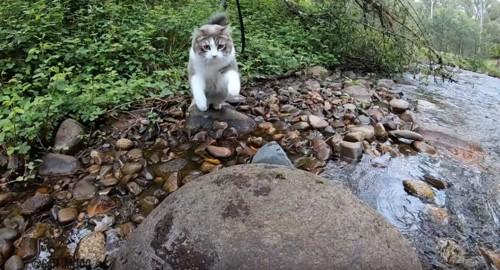 石を渡るビンディ