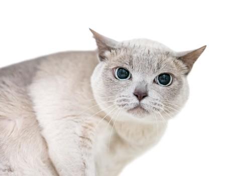 瞳孔が開いた猫