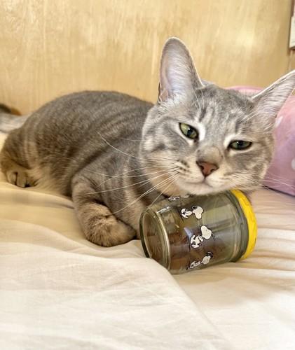 瓶に顎を乗せている猫
