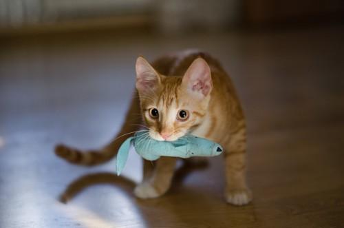 おもちゃをくわえた猫