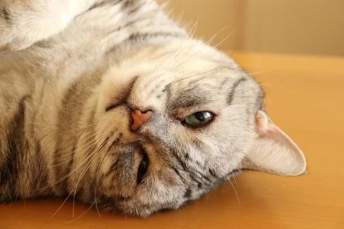 床にスリスリする猫
