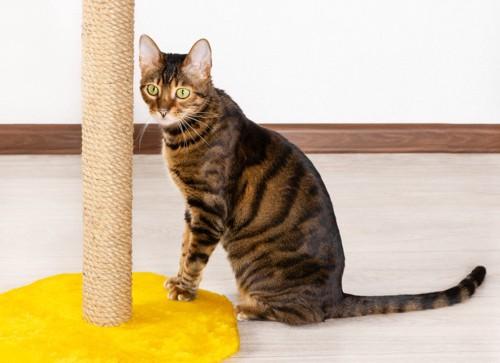 爪とぎの前にいる猫